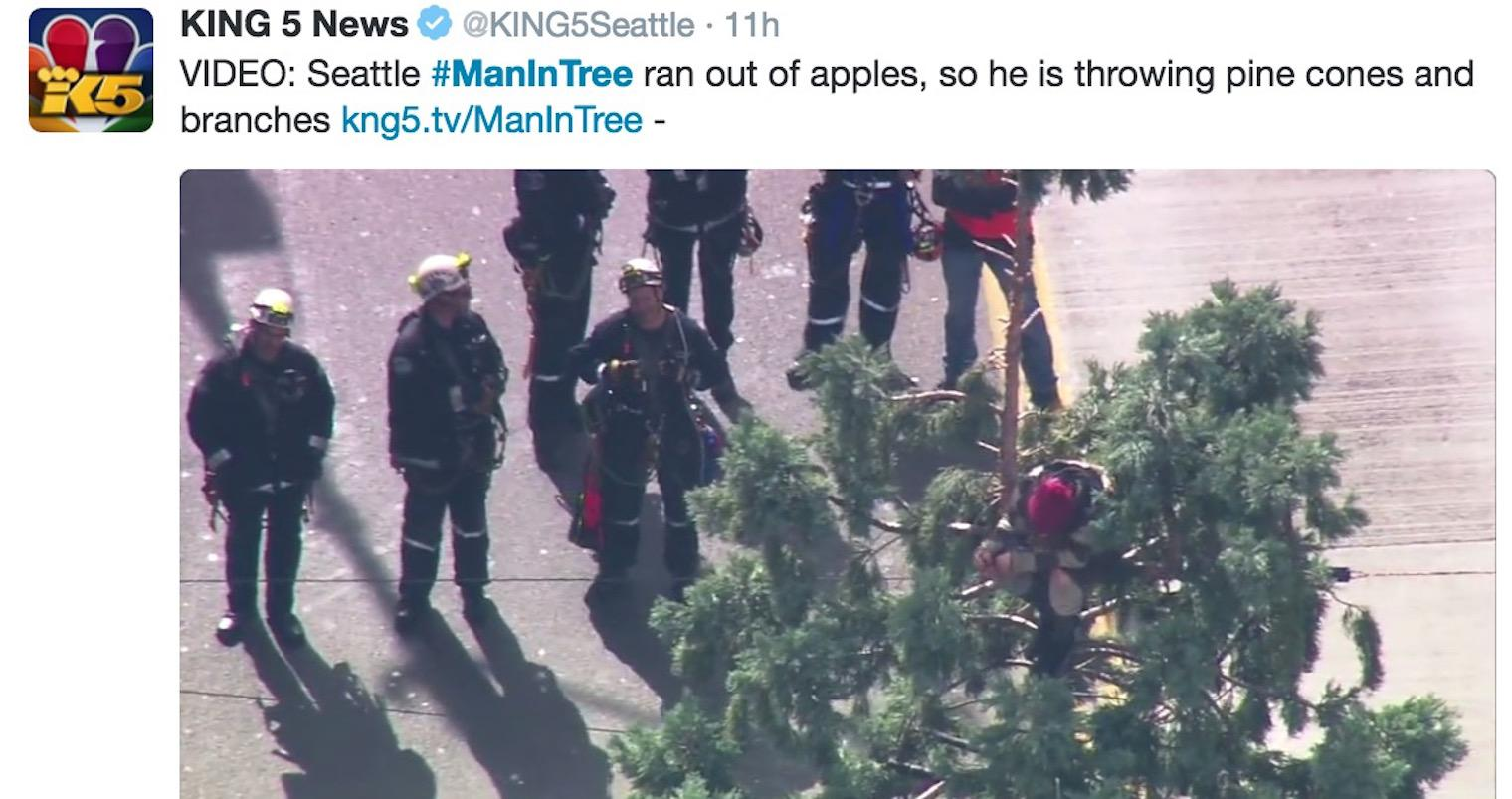 Man climbs giant tree in Seattle, refuses to get down