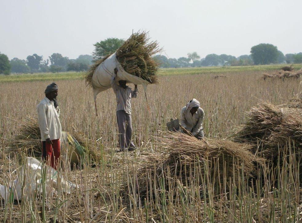 Farm workers in Madhya Pradesh