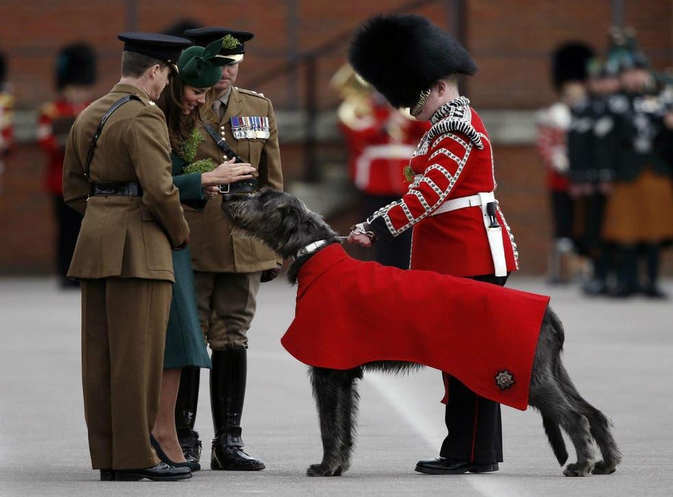 The Irish Guards' official mascot, wolfhound Domhnall of Shantamon (