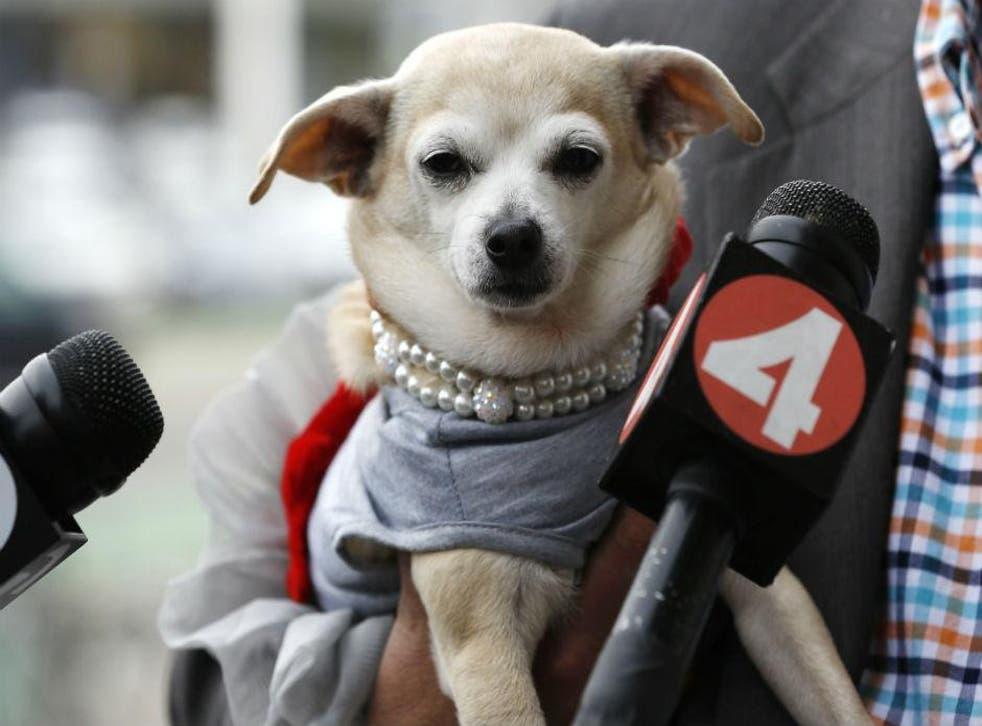 Frida is the first dog mayor of San Francisco