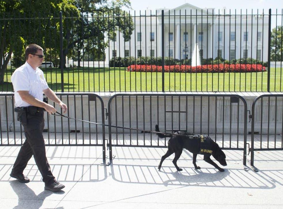 A secret service officer with a K-9 police dog