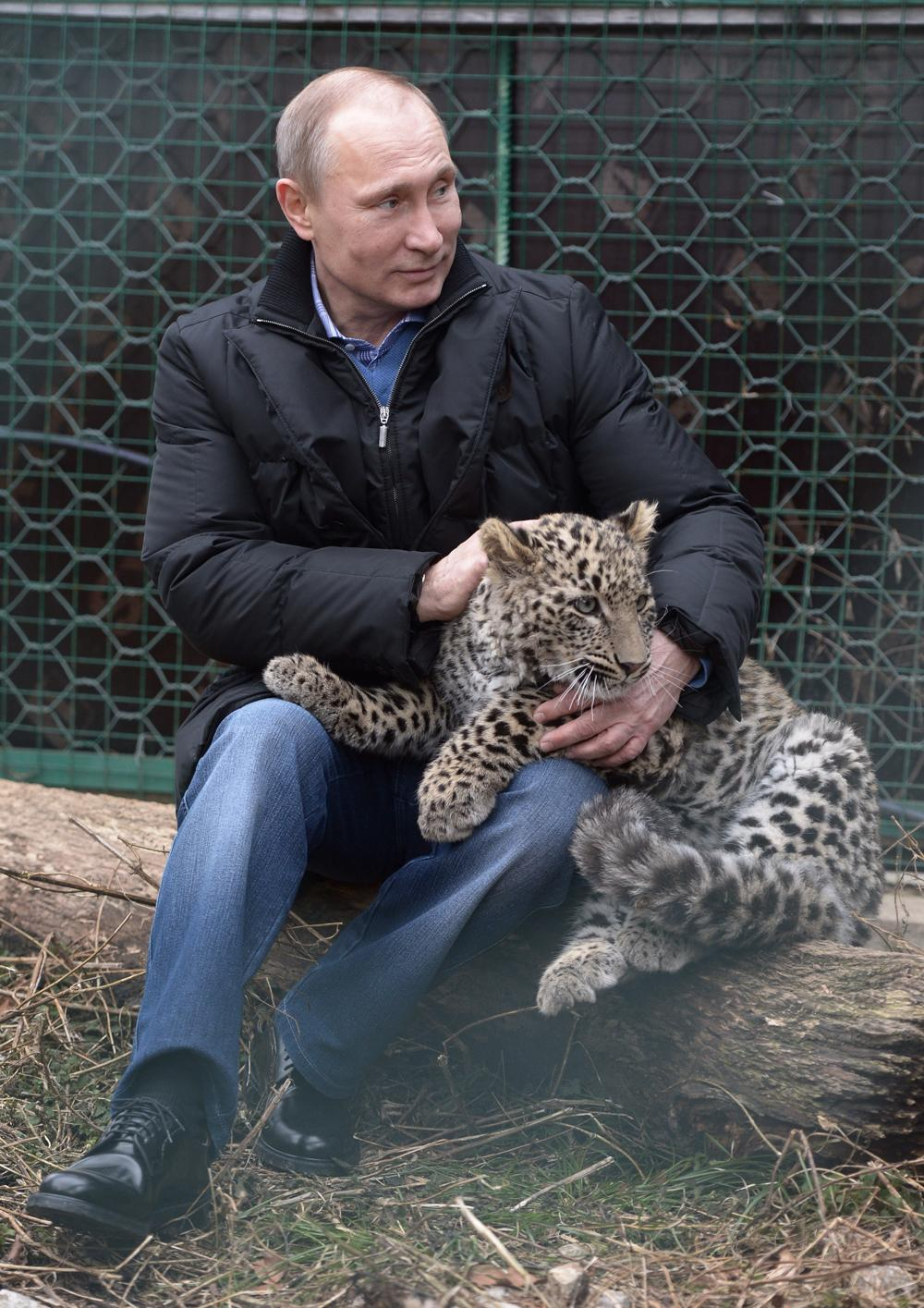 Here Is An Unsettling Image Of Vladimir Putin Cuddling A Koala Indy100