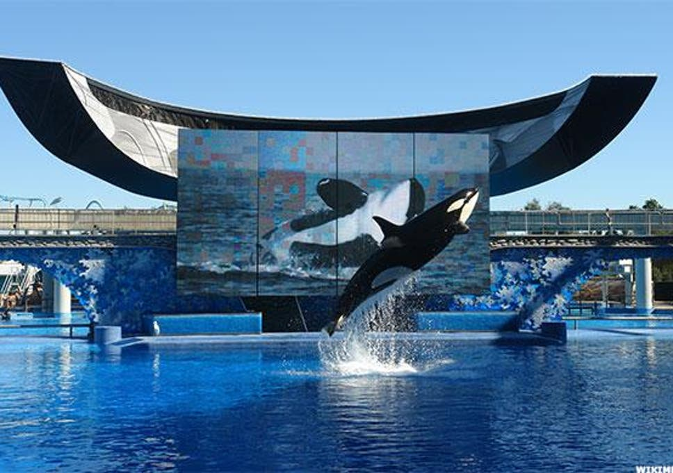 SeaWorld will open first theme park without orcas in Abu Dhabi | The