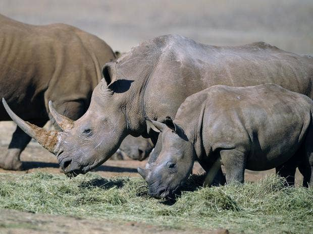 28-rhino-AFP.jpg