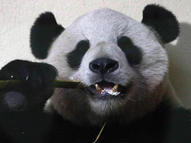 Pg-22-panda-pa.jpg