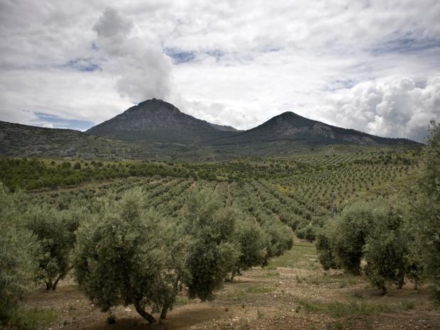 38-Olives-AFP.jpg