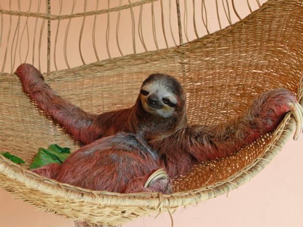pg-28-sloth-cooke.jpg