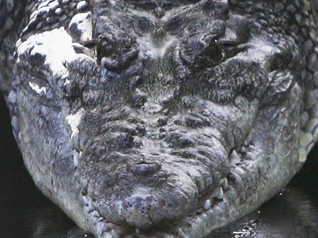 SU34-crocodiles-gt.jpg