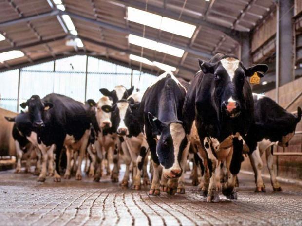 pg-21-dair-farmers-rex.jpg