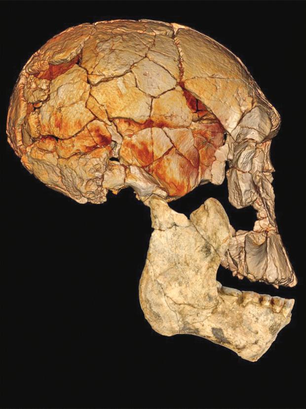pg-16-skull-spoor.png