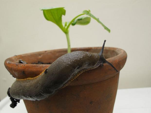 18-slugs-alamy.jpg