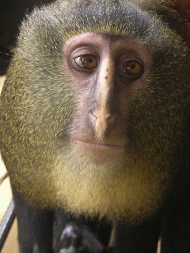 MonkeyPA.jpg
