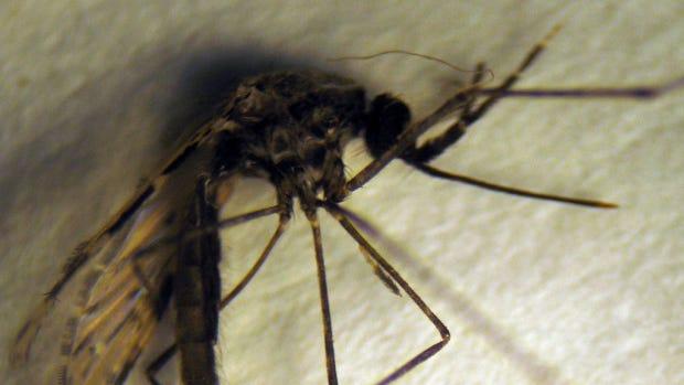 08-mosquito.jpg