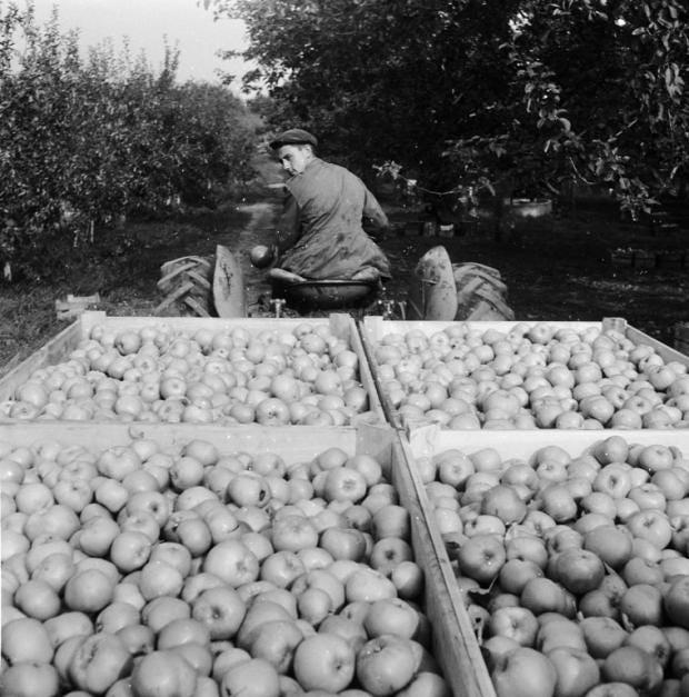 bramley-apples-GETTY.jpg