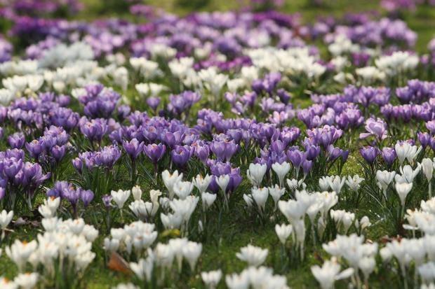 floweres.jpg