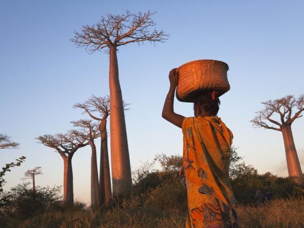 Madagascar-LP.jpg