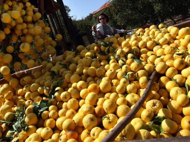 grapefruit80438658.jpg