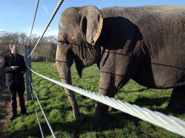 elephant.susa.jpg
