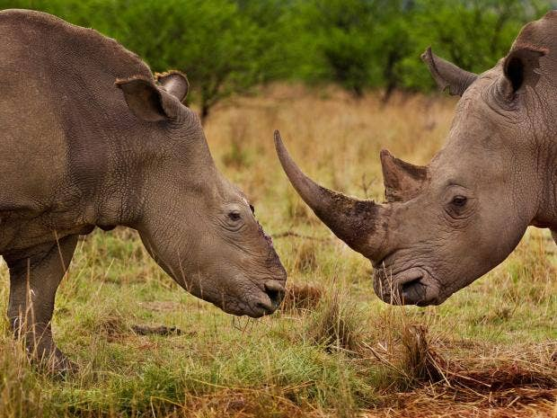 pg19-rhino-epa.jpg
