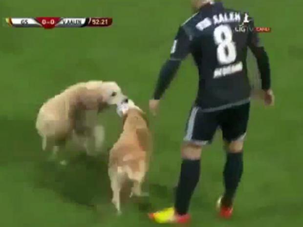 dogs-invade-pitch.jpg