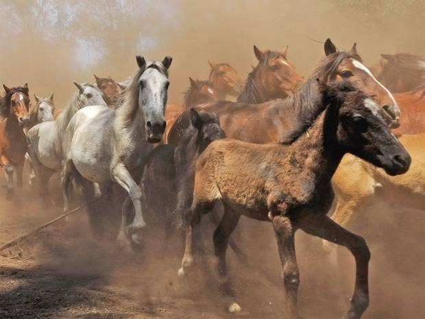 pg-22-wild-horses-getty.jpg