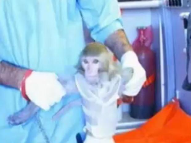monkey-revised.jpg