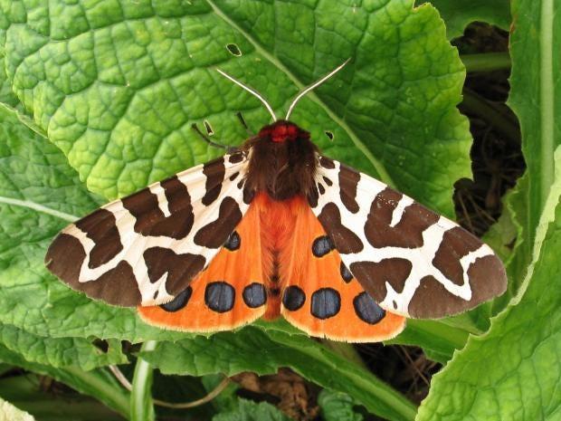 moths-pa.jpg