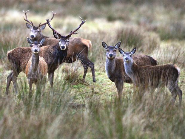 web-deer-getty_1.jpg