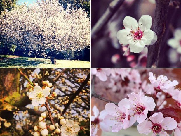 pg-24-instagram.jpg