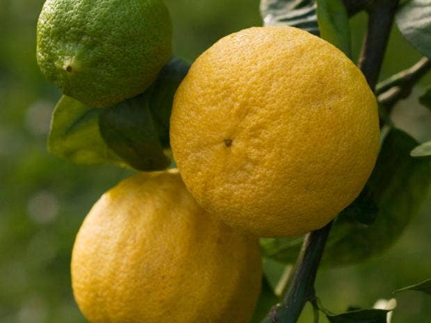 36-bergamots-alamy.jpg