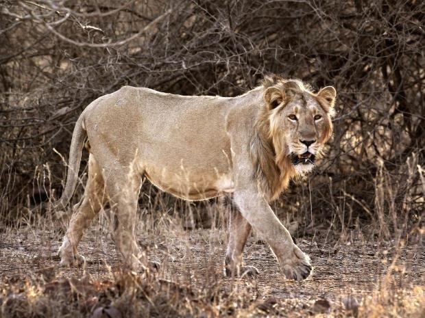 pg-32-lions-ap.jpg