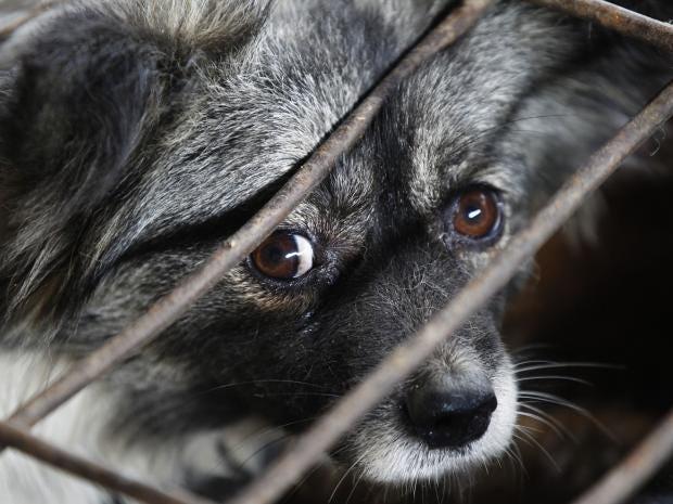 Animal-cruelty-REX.jpg