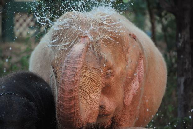 white-elephant.jpg