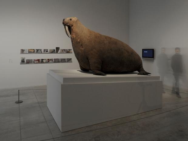 stuffed-walrus.jpg