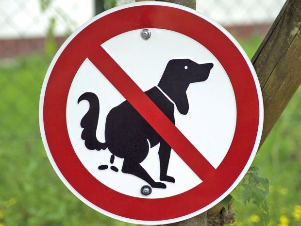 web-dog-poo-rex.jpg