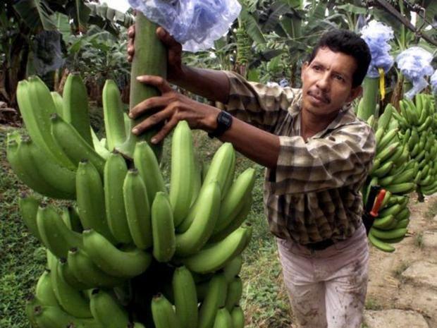 colombia-banana.jpg