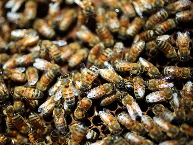 web-honeybees-getty.jpg