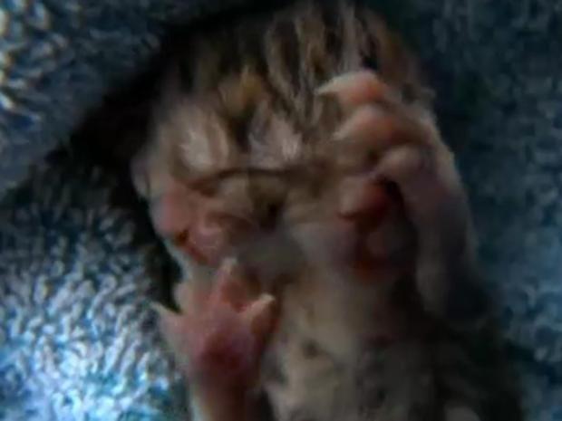 two-face-kitten.jpg