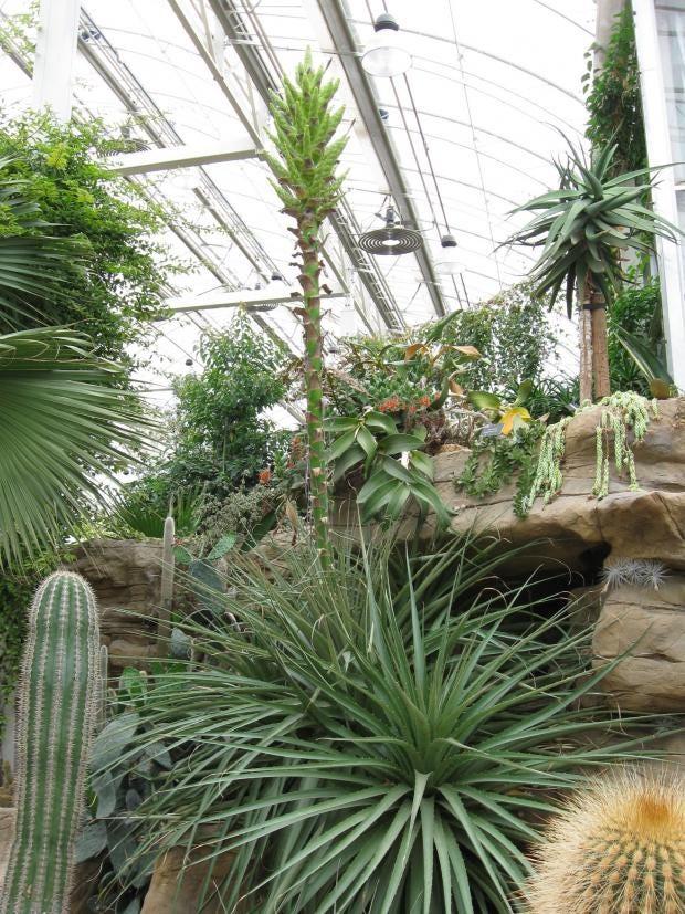 12-plant.jpg