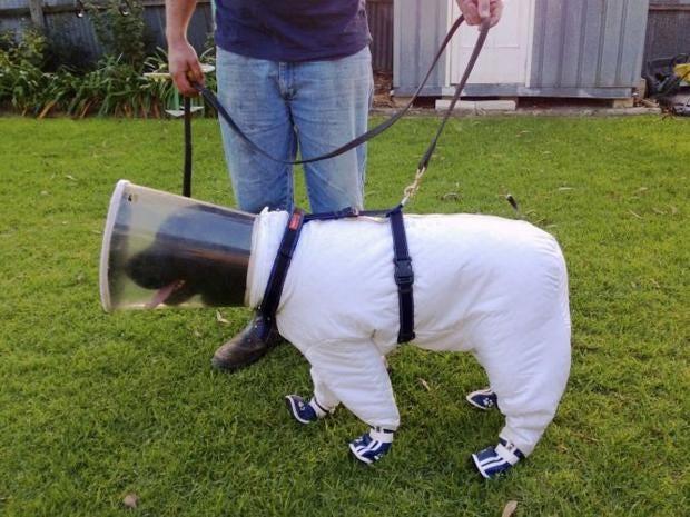 AN24075652A-labrador-dog-na.jpg