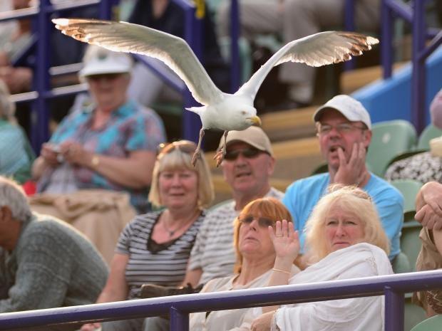 sea-gull-GETTY.jpg