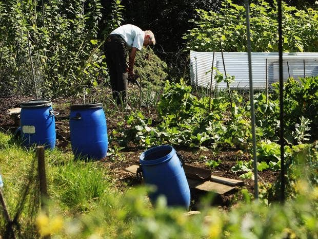 allotment-gt.jpg