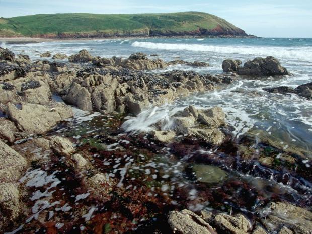40-mussel-beach-alamy.jpg