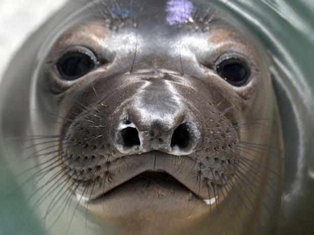 sea-lion.jpg