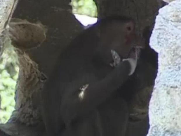 monkey-ice-cream.jpg
