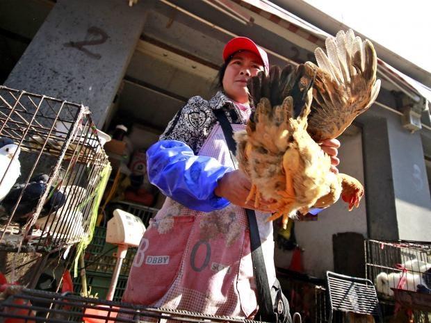 web-bird-flu-ap.jpg