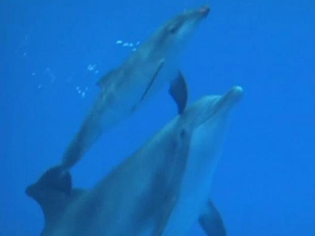 baby-dolphin.jpg