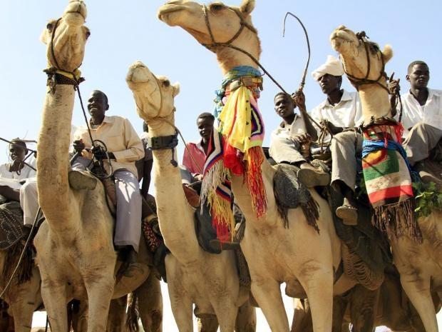 20-camel-AFP.jpg
