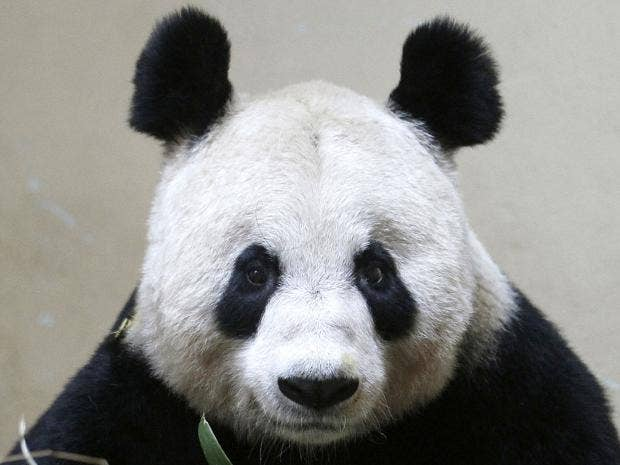 3-Tian-Tian-Reuters.jpg