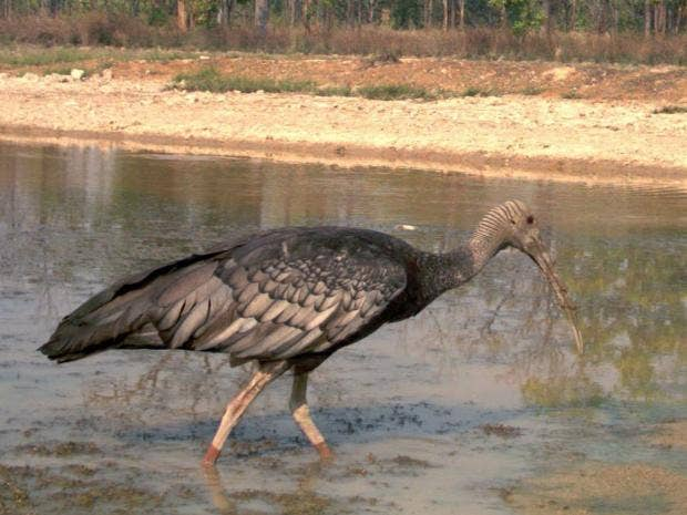 32-ibis-epa.jpg